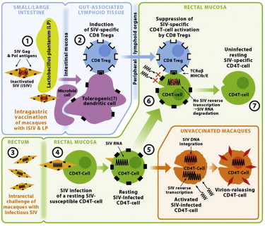 cell host and microbe author instructions