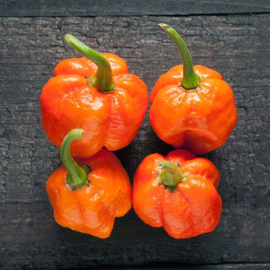 grow your own chillies kit instructions